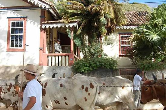 Dr. Fontana acompanhando a passagem de carros de boi em frente sua casa em Ibertioga